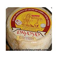 Payoyo cheese cured sheep goat mixture in butter 2 k.